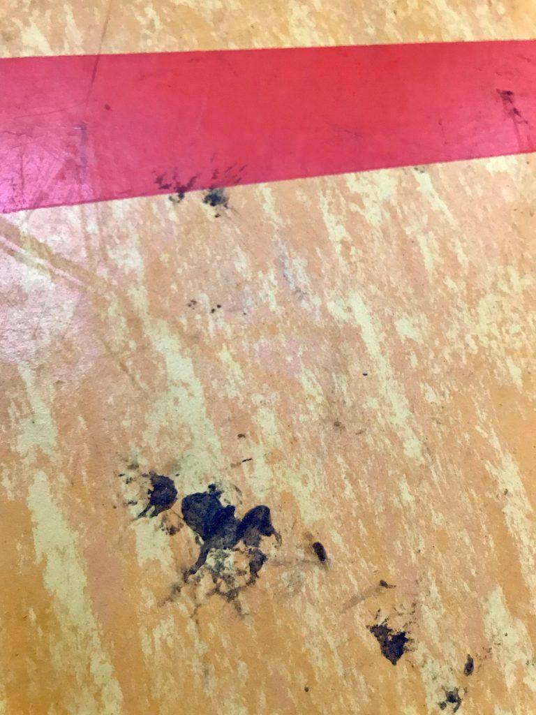 Harzflecken auf dem Hallenboden führen dazu, dass das Harzverbot durchgesetzt wird